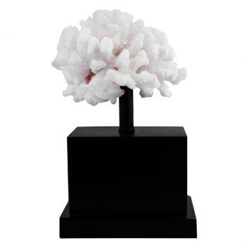 Coral de Resina M Preto Cod: NU740HI56ZKXMOB