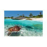 Painel Adesivo de Parede - Tartaruga Marinha - 025pn-G