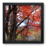 Quadro Decorativo - Árvores - 016qdp