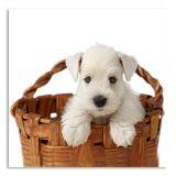 Quadro Cachorro I Uniart Branco 30x30cm